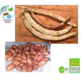 Βιολογικός Σπόρος Φασολάκι μπαρμπούνι
