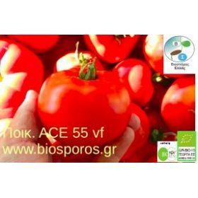Βιολογικός Σπόρος Τομάτα Ace 55 VF